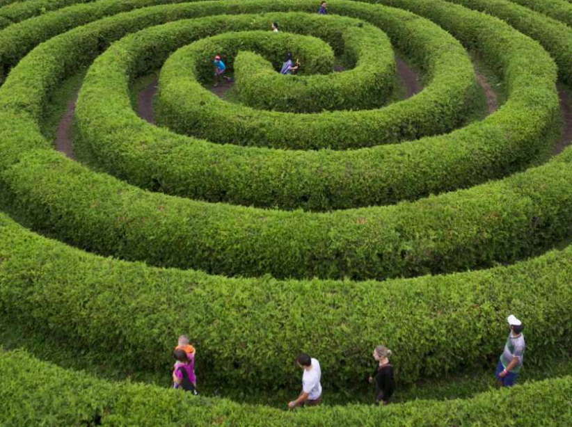 spiral hedge maze with people