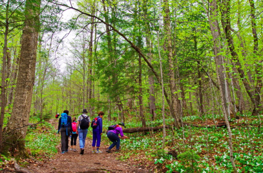 Gatineau Park bringing plenty of green, economic study finds